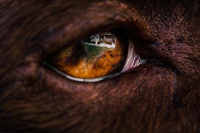 Psí oči jsou krásné.