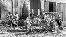 Dříve se hojně využívala zvířata, která neměla s nevěrnicemi slitování - slon, osel, kůň.