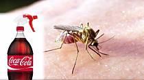 Cola pomůže také s odstraněním bolesti po bodnutí hmyzem. Stačí si jen postižené místo polít a je po problému.