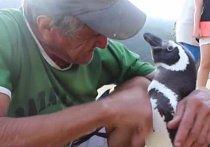 Rybář našel mládě doslova za pět minut dvanáct. Bylo totiž pokryté ropou a na pokraji smrti. Joao Pereira de Souza zvířátko očistil a nakrmil.