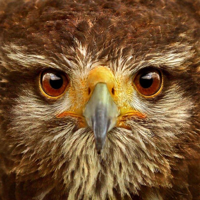 Jak vidí svět zvířata: Mnohdy úplně jinak, než si myslíme