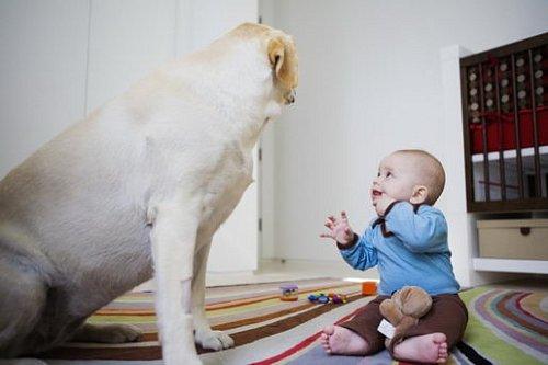 Máme miminko, pes musí pryč