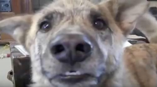 mluvící pes