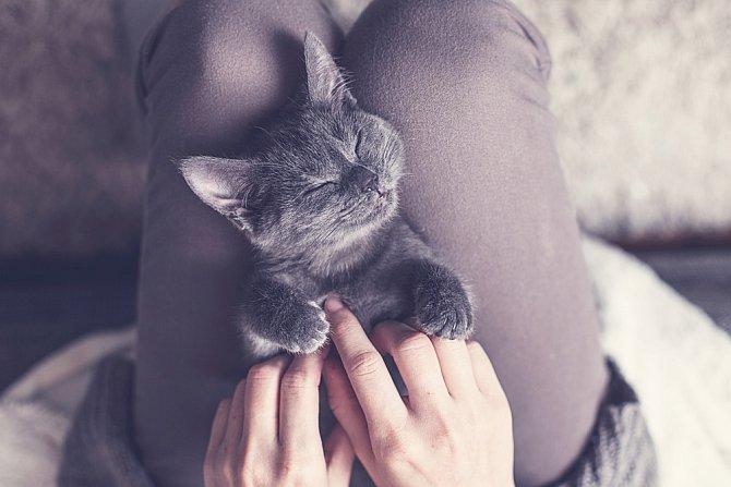 Kočky vyžadují jen plnou misku a pravidelné mazlení.