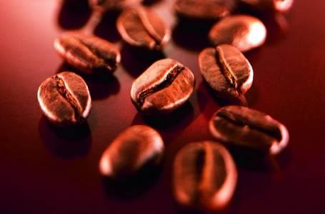 Tajemné začátky kávy – Kouzlo pěstování