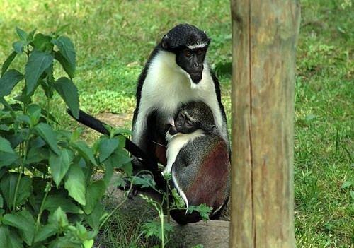 Zoo Poznaň