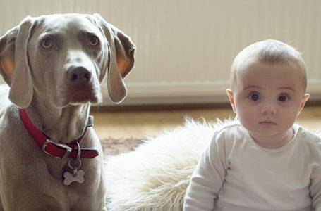 Máme miminko, pes musí pryč!
