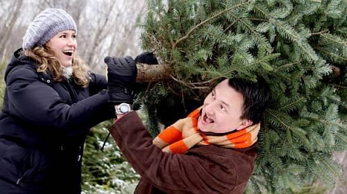 Umělý, nebo živý vánoční stromek?