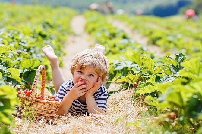 Jahody kupované v supermarketu jsou zdrojem nebezpečných látek. Mezi zrníčky se mohou snadno usadit a těžko se jich zbavíte.