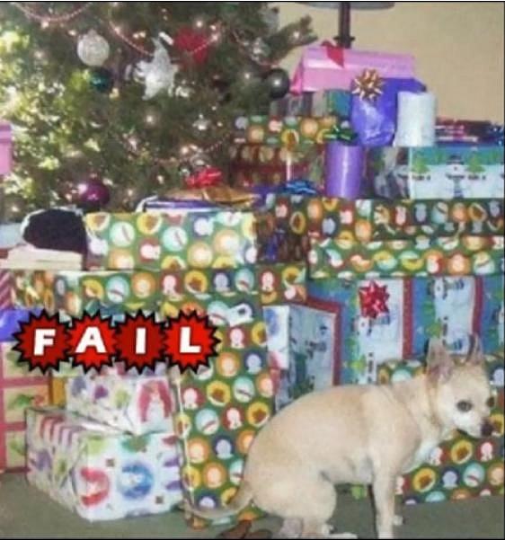 Pejsek jasně vyjádřil, co si o těch Vánocích myslí.