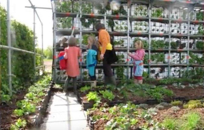 Lidé si zde můžou natrhat čerstvou zeleninu