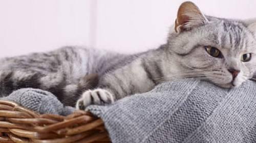 Co možná ještě nevíte o kočkách