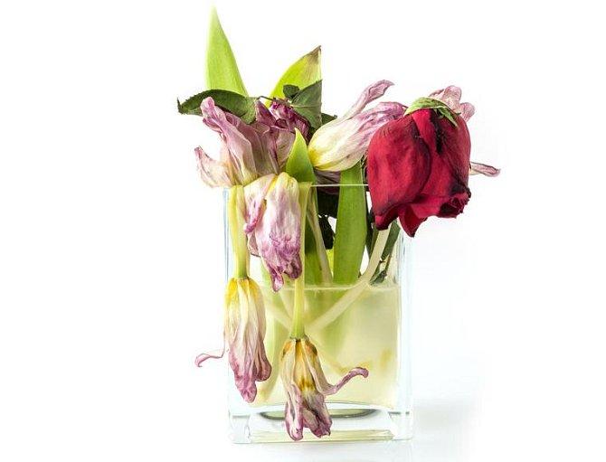 Jak vzpružit řezané květiny? Naplňte lavor horkou (pozor ne vařící) vodou, stonky zkraťte o cca 2,5 cm a celé je do něj ponořte. Nechte květiny 30 až 60 minut ve vodě a poté je vraťte do vázy. Právě jste jim prodloužili pobyt u vás doma.