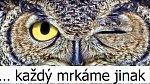 Co jste nevěděli o lidském oku?