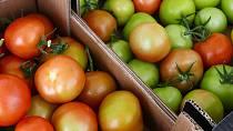 Zelenina a ovoce, které k nám putuje ze zahraničí, dozrává na cestě. Ta tam je zralá chuť sluníčkem prohřátých plodů.