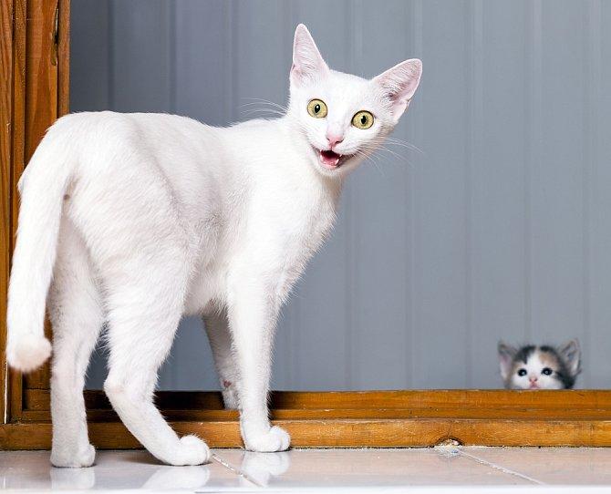 S kočkami je spouta zábavy.