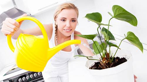 Návod, jak použít obyčejné droždí pro neobyčejný růst rostlin!