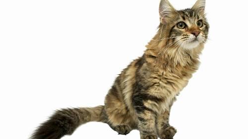 <p>Hračka pro kočky je speciálně navržená tak, aby je zaujala a pobavila na co nejdelší dobu. Předst