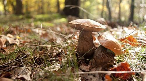 Pozor na tyto houbařské nesmysly!