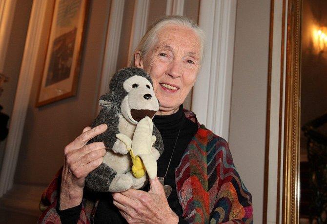 Jane je dnes také velkou bojovnicí za práva zvířat, hlavně šimpanzů.