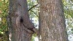 Optické iluze - jenom stromy
