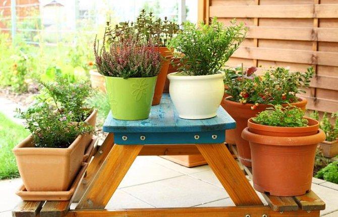 Na dobře osluněném balkóně se bude dařit květinám, zelenině i bylinkám