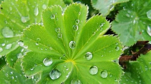 Kontryhel: Mocná bylinka pro zdraví žen