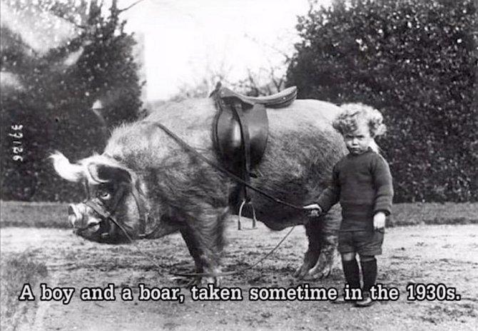 Chlapec a jeho oř. Přesněji řečeno prase. Obrázek pochází z doby kolem roku 1930.