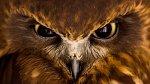 Oči dravých ptáků jsou zajímavé.