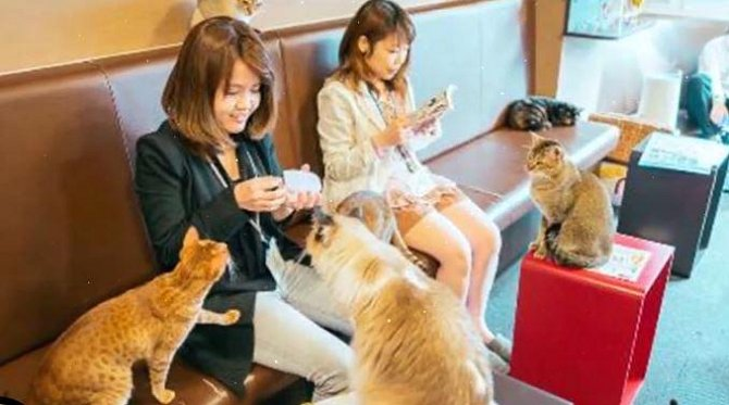 V této restauraci se volně pohybuje několik desítek koček!