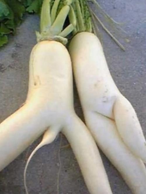 Ilustrační foto - zelenina