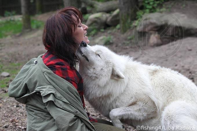 Všichni vlci k Tanje vzhlížejí a berou ji jako vůdkyni.