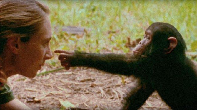 Jane trávila se šimpanzi celé dny.