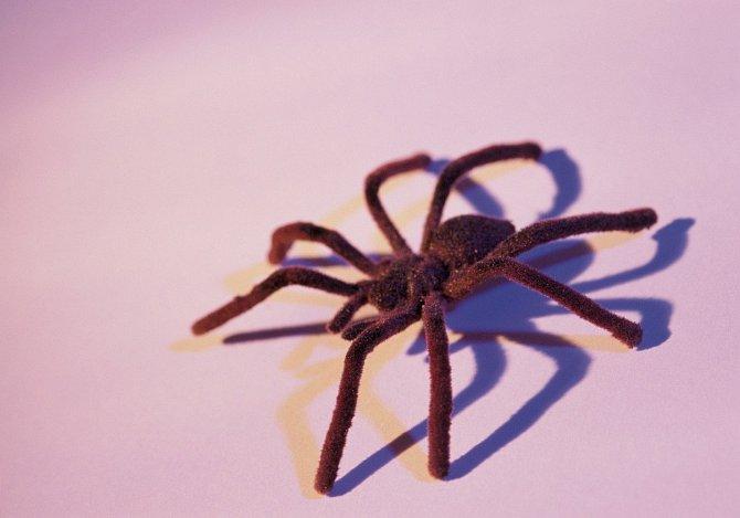 Pavouky v domě nikdo nechce.