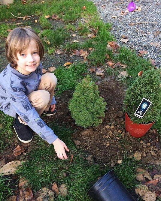 Henry rád sází stromy a povídá si s nimi. Jsou podle něj živí stejně jako my.