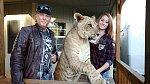 Domácnost sdílená s mladou lvicí je prý pohoda.