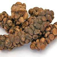 Káva - Kopi Luwak