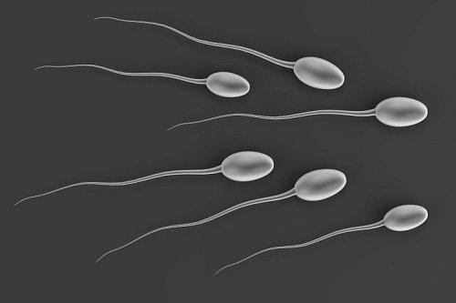 Plodnost klesá: Jak zajistit u muže kvalitní spermie?