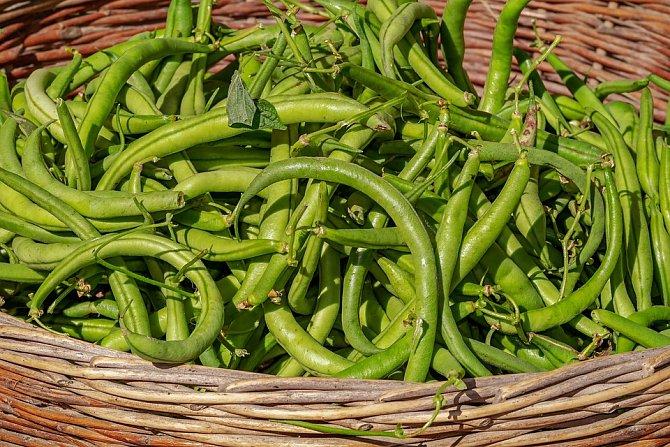 Zelené fazolky obsahují spoustu důležitých látek