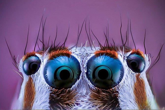 Pavouci jsou vlastně docela roztomilí.