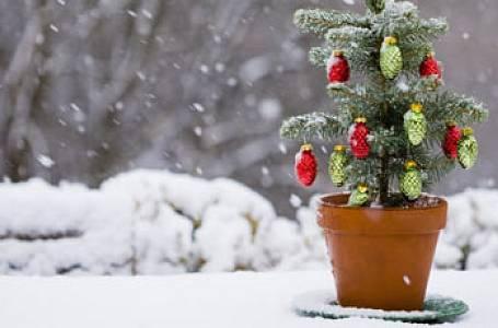 Test: Kde se neslaví Vánoce?