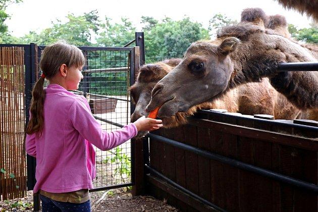Setkání se zvířaty bylo pro holky velkým zážitkem