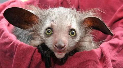 Nejnovější mláďata roku 2012 ze zoo– Miminka, která musíte vidět