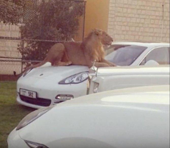 Osobní hlídač auta