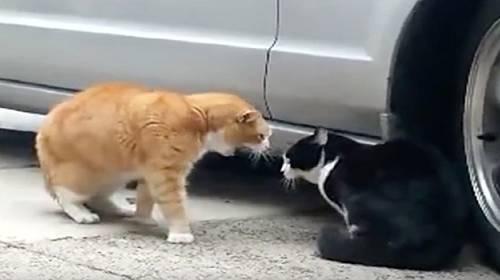 mluvící kočky