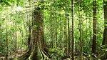 Amazonský deštný prales – Ano, určitě vás minimálně jednou v životě napadlo, že si uděláte výlet do pralesa. Zapomeňte na to, že byste tu rozbili stanový tábor a jali se ohřívat párky v kotlíku nad ohništěm! Nebezpečí číh?...
