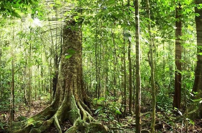 Amazonský deštný prales – Ano, určitě vás minimálně jednou v životě napadlo, že si uděláte výlet do pralesa. Zapomeňte na to, že byste tu rozbili stanový tábor a jali se ohřívat párky v kotlíku nad ohništěm!.
