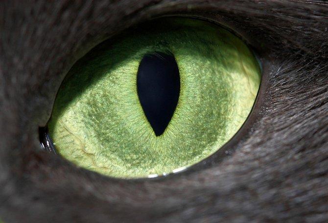 Kočičí zelené oči.
