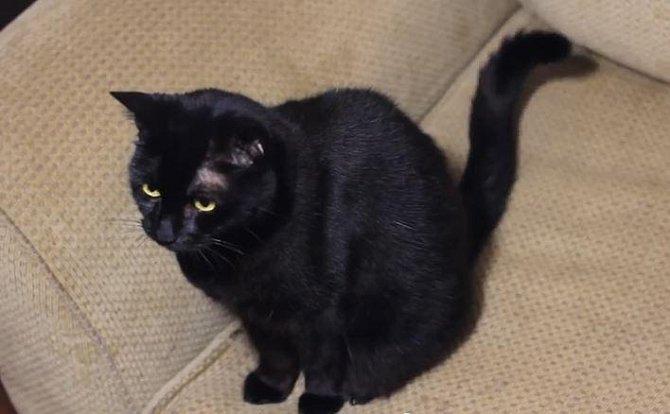 Kočky nesnáší ocet. Stačí tedy místa, která nechcete, aby vaši zvířecí miláčkové navštěvovali, postříkat octem.