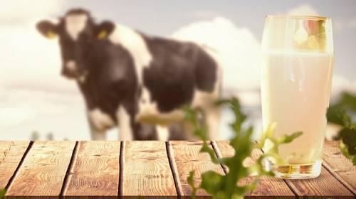 Je mléko zdravé?